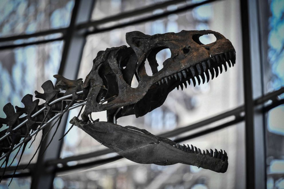 PHOTO: A skeleton of an undeterminate carnivorous dinosaur on display at the first floor of the Eiffel Tower in Paris, June 2, 2018.