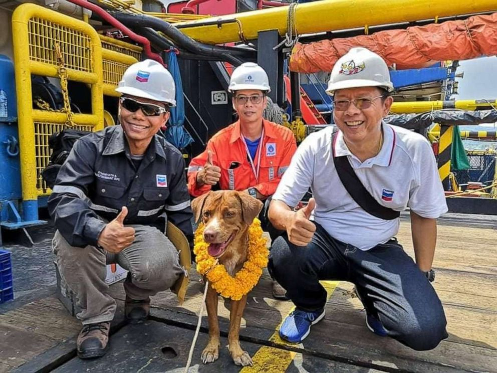 Dog rescued by oil rig crew 135 miles off Thai coast
