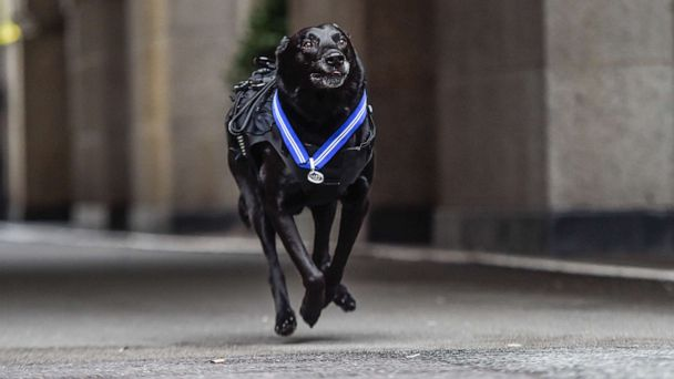 White House guard dog honored with UK award for protecting Obama family