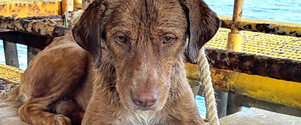 PHOTO:Workers from the Chevron Thailand Exploration and Production Ltd. oil rig rescued a dog swimming 137 miles offshore in the Gulf of Thailand, April 12, 2019.