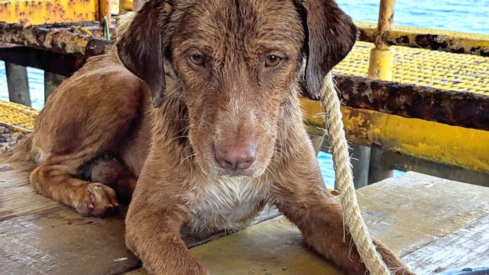 Oil rig workers rescue dog 137 miles off coast of Thailand