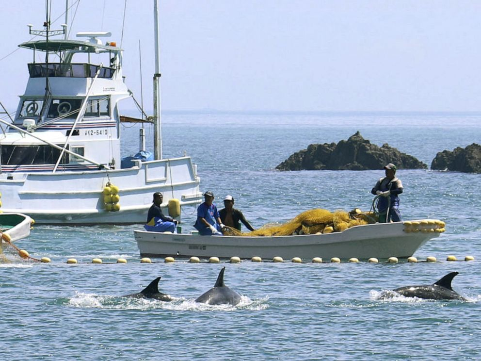 Kyodo  Newscom Fishermen drive dolphins into a cove off Taiji Japan Sept. 2 2019