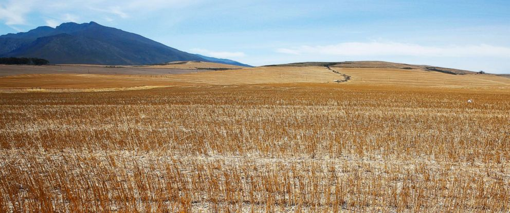 PHOTO: A general view of a dried out wheat field in the Overberg, South Africa, Jan. 5, 2018.