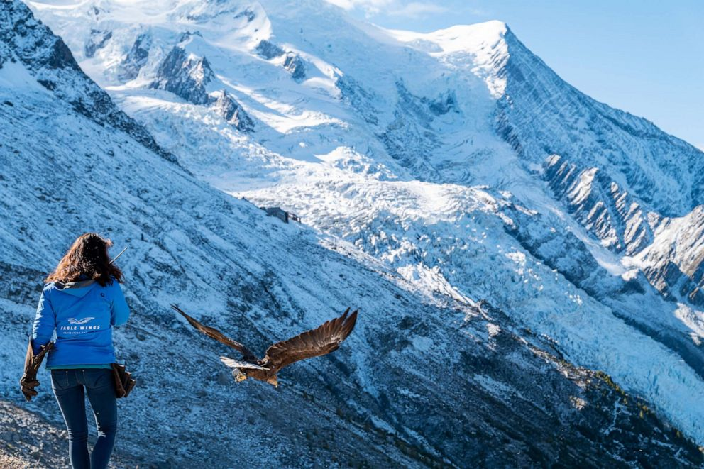 PHOTO: Falconer Eva Meyrier releases Victor from the Plan dAguille, above the village of Chamonix near Mont Blanc in France.