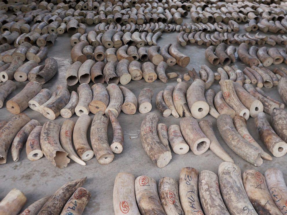 ea1199b54d991 Singapore seizes record $48.6 million shipment of elephant ivory and  pangolin scales