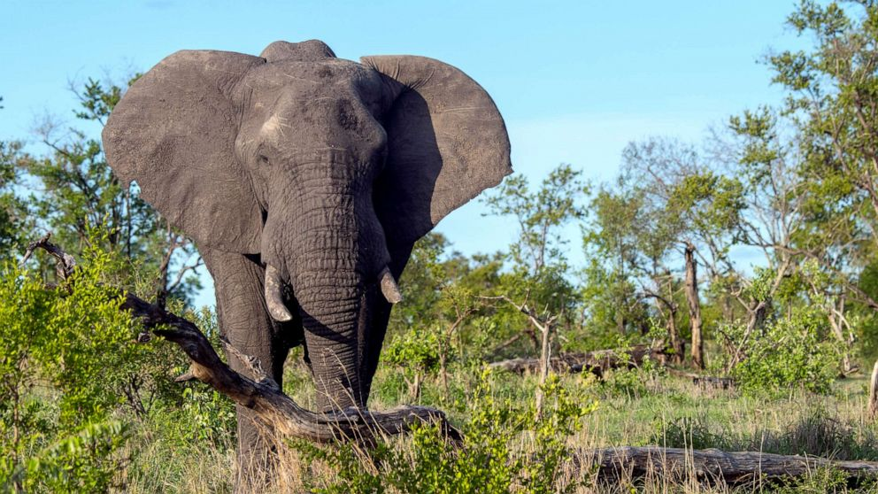 Suspected poacher killed by elephants at South African national park