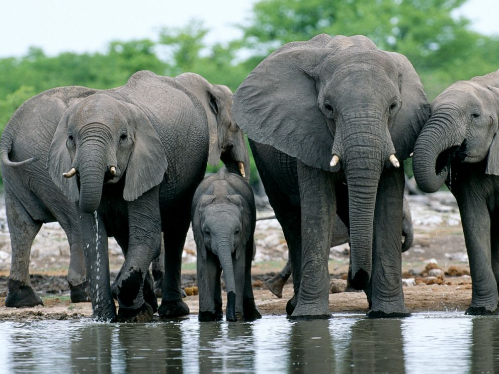 PHOTO: Elephants are pictured at a water hole in Etosha National Park, Namibia.