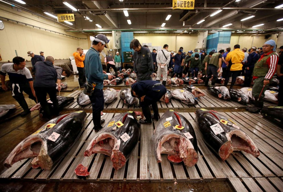 PHOTO: Wholesalers check the quality of fresh tuna fish at the Tsukiji fish market in Tokyo, Sept. 29, 2018.