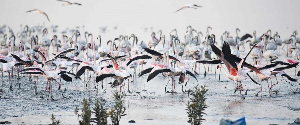 PHOTO: People visit Flamingo Sanctuary In Thane, on the occasion of wetlands day on Feb. 2, 2019, in Mumbai, India.
