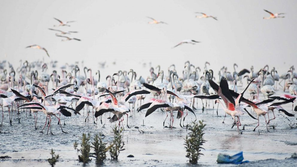 People visit Flamingo Sanctuary In Thane, on the occasion of wetlands day on Feb. 2, 2019, in Mumbai, India.