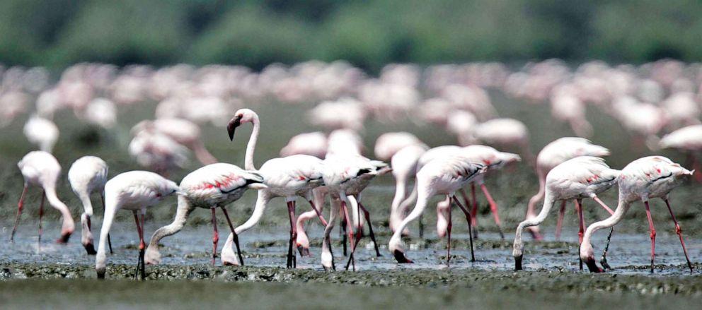 PHOTO: Flamingos are pictured at Sewri Creek in Mumbai, India, March 27, 2006.