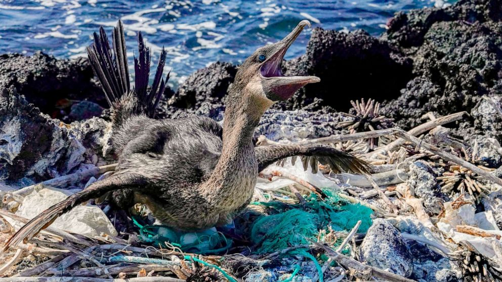 'There's no planet B': Conservation efforts manage rising tourism in Galapagos