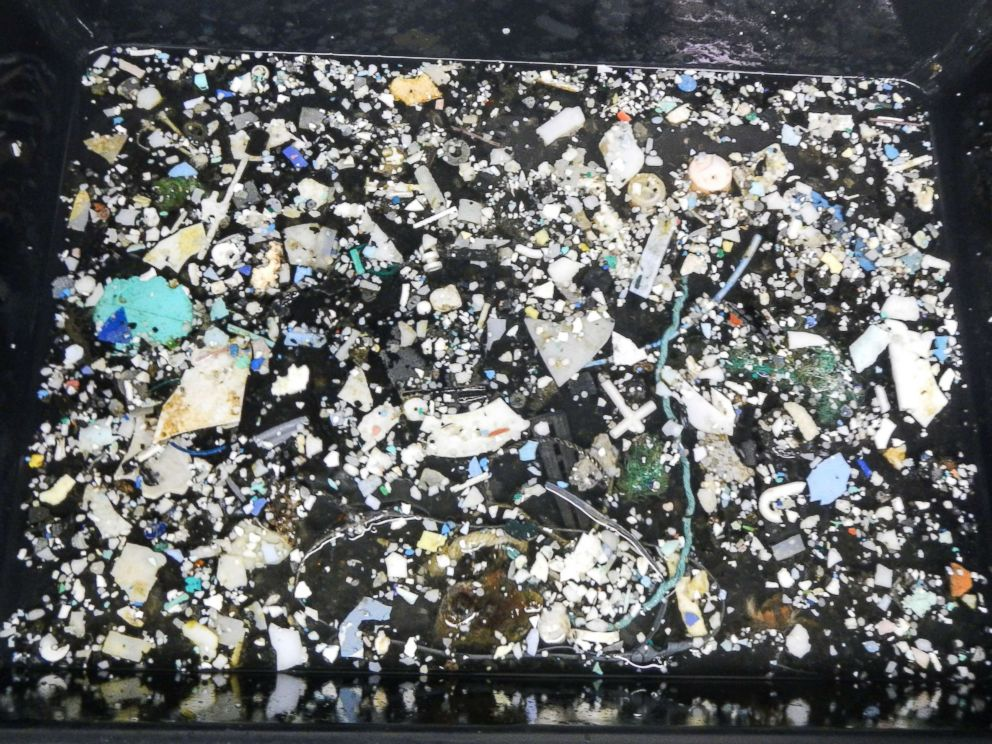 PHOTO: A photo made available by The Ocean Cleanup on 23 March 2018 shows plastic samples pulled from the ocean at the Great Pacific Garbage Patch (GPGP), located between halfway between Hawaii and California.