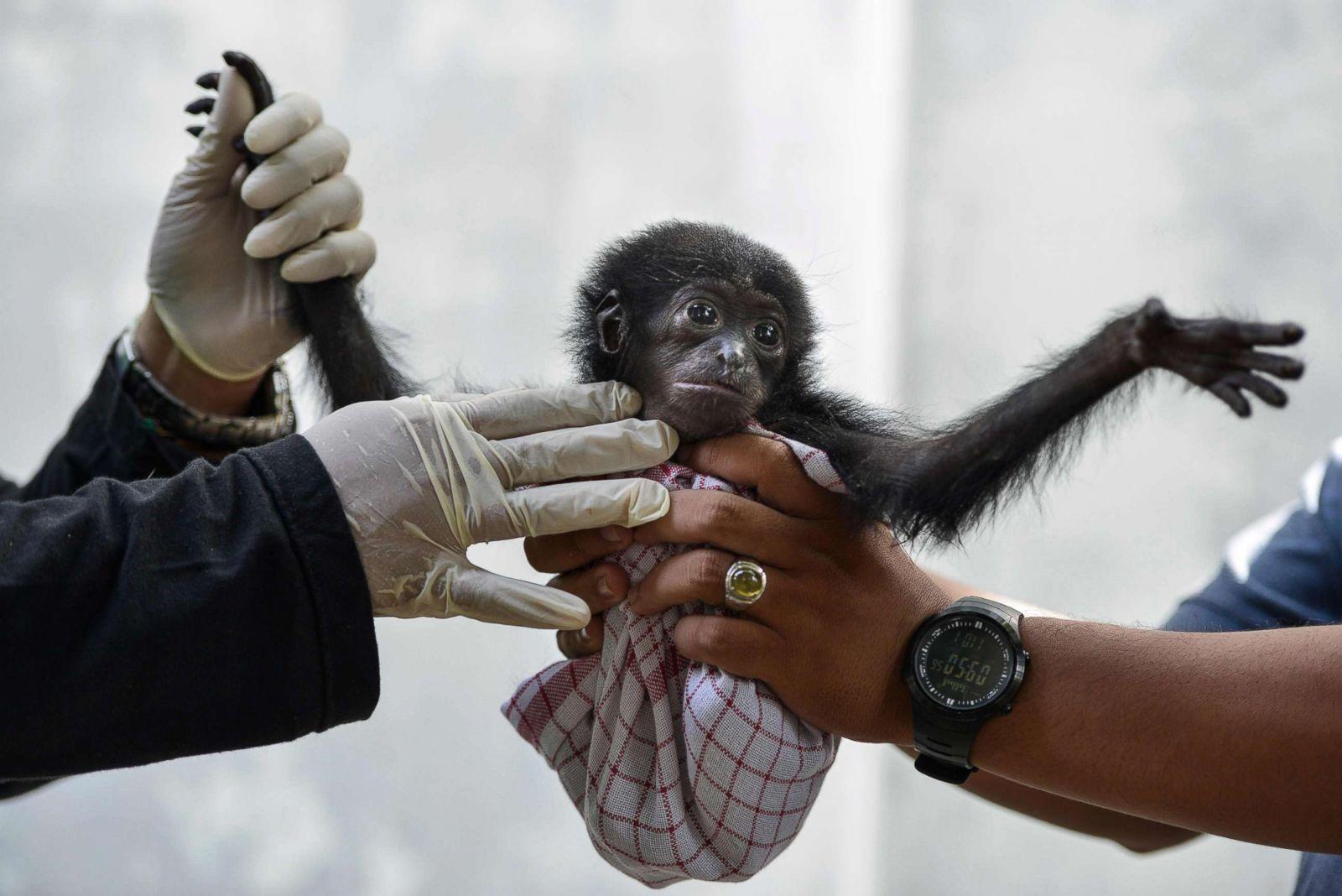 Cutest baby animals from around the world
