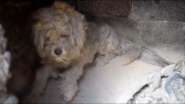 Dog found alive in oven after Greek wildfires has found his forever home