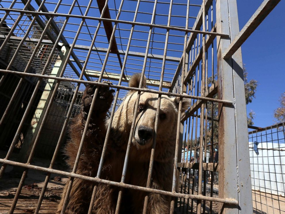 Animals rescued from Mosul's abandoned zoo arrive safely in Jordan