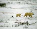 PHOTO: Melting Permafrost