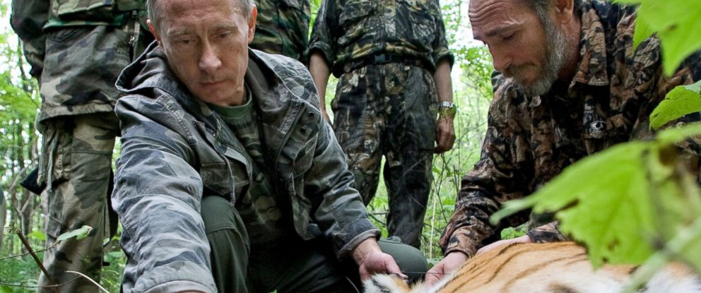 PHOTO: Vladimir Putin is pictured in this undated file photo tagging a Siberian Tiger while visiting the Barabash tiger reserve, in eastern Siberia in the Amur Region of the Russian Federation.