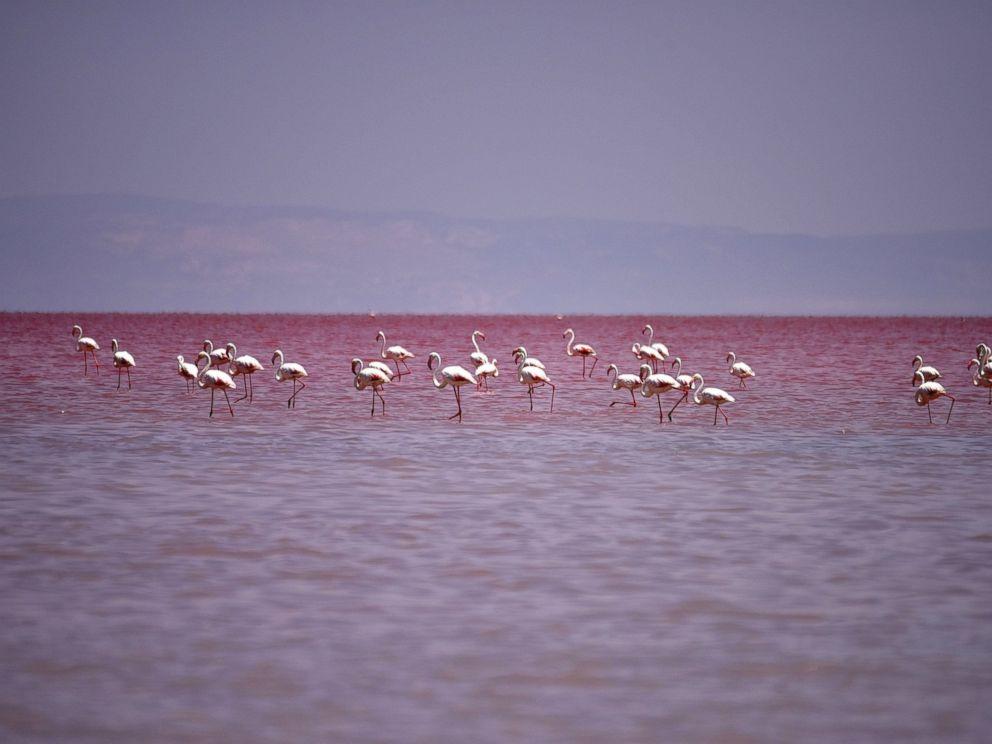 PHOTO: Flamingos are seen at the Salt Lake, July 16, 2015, in Aksaray, Turkey.