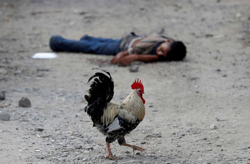 PHOTO: A rooster walks past the dead body of a Barrio-18 gang member in San Pedro Sula, Honduras, Sept. 28, 2018.