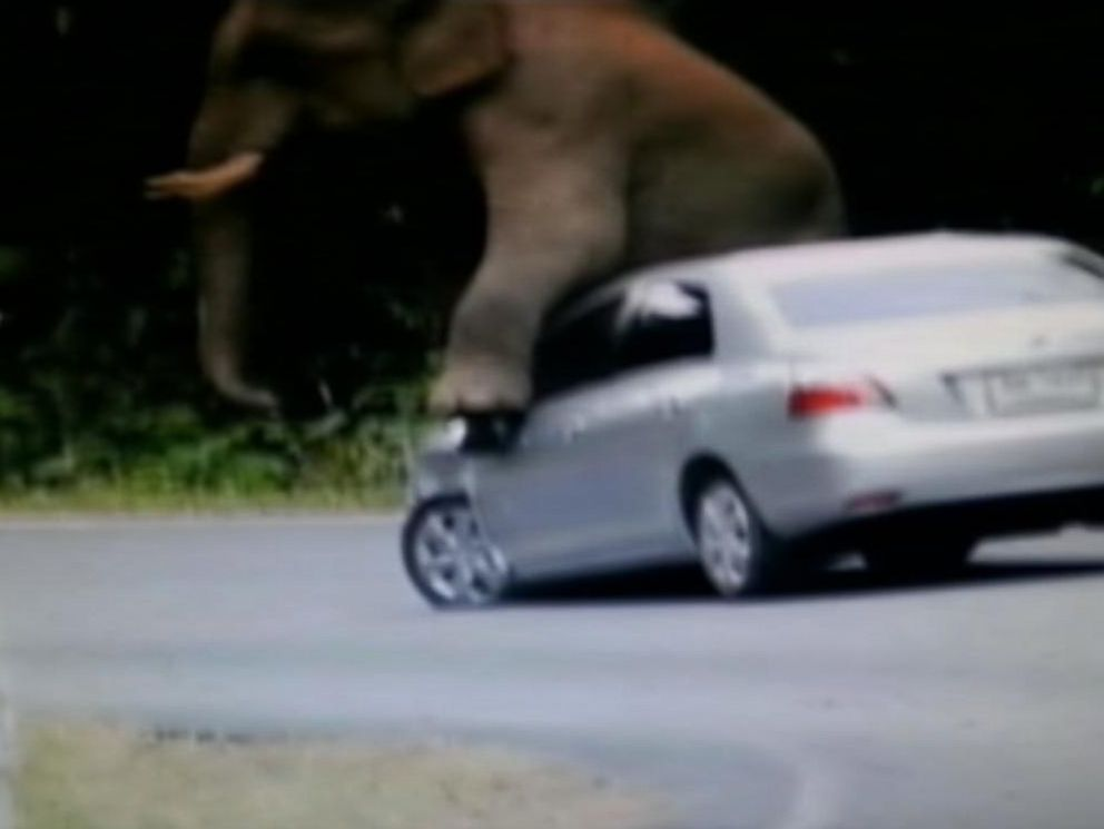 See Video of Wild Elephant Climbing on Car in Thailand - ABC