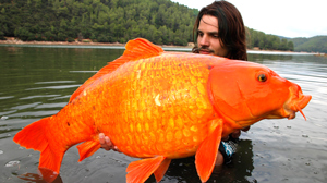 PHOTO Raphael Biagini shows off a Koi that he says he caught in September of 2008.