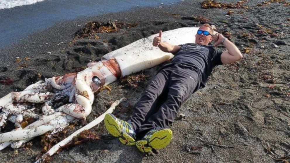 giant squid with 16 feet long tentacles washes up on new zealand