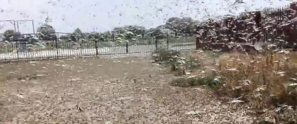 PHOTO: A video shot by a local man in Achikulak, a village in the Stavropol region of southern Russia, and uploaded to YouTube on Tuesday, July 28, 2015, shows thousands of locusts swarming near a local church.