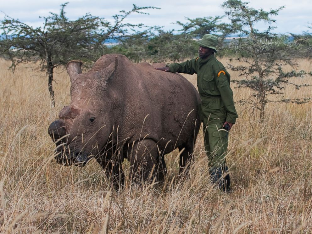 PHOTO: Sudan, the last male white rhino is seen with his keeper Mohammed, in this undated handout photo.