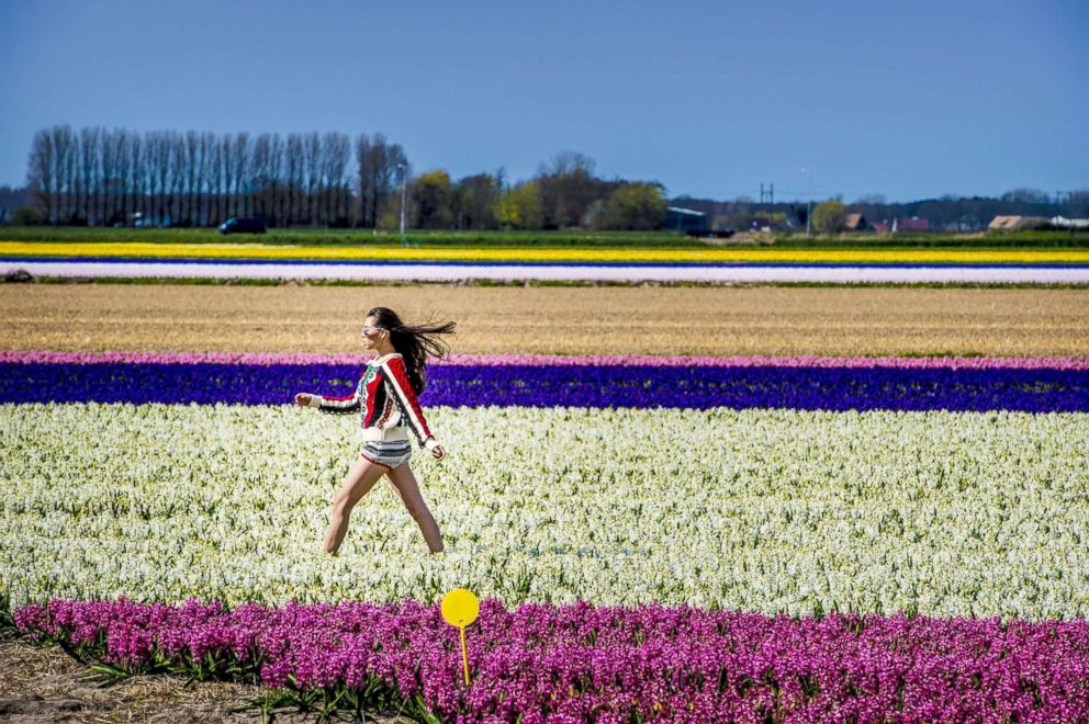 PHOTO: Visitors walking through fields of blossoming tulips in Keukenhof gardens, April 17, 2018, in Lisse, The Netherlands.