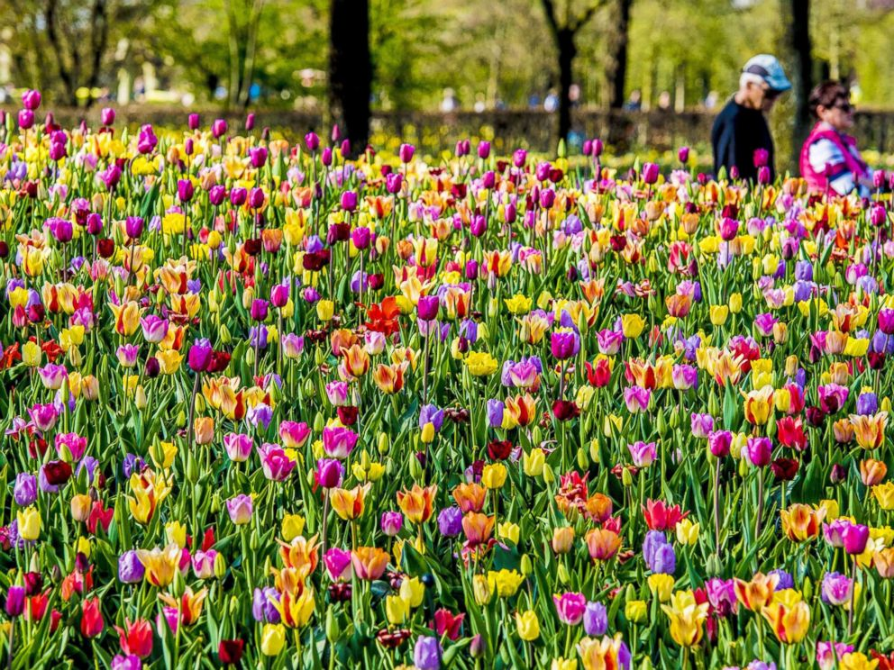PHOTO: Visitors walk through Keukenhof gardens to see the colorful tulip fields, Arpil 17, 2018, in Lisse, The Netherlands.