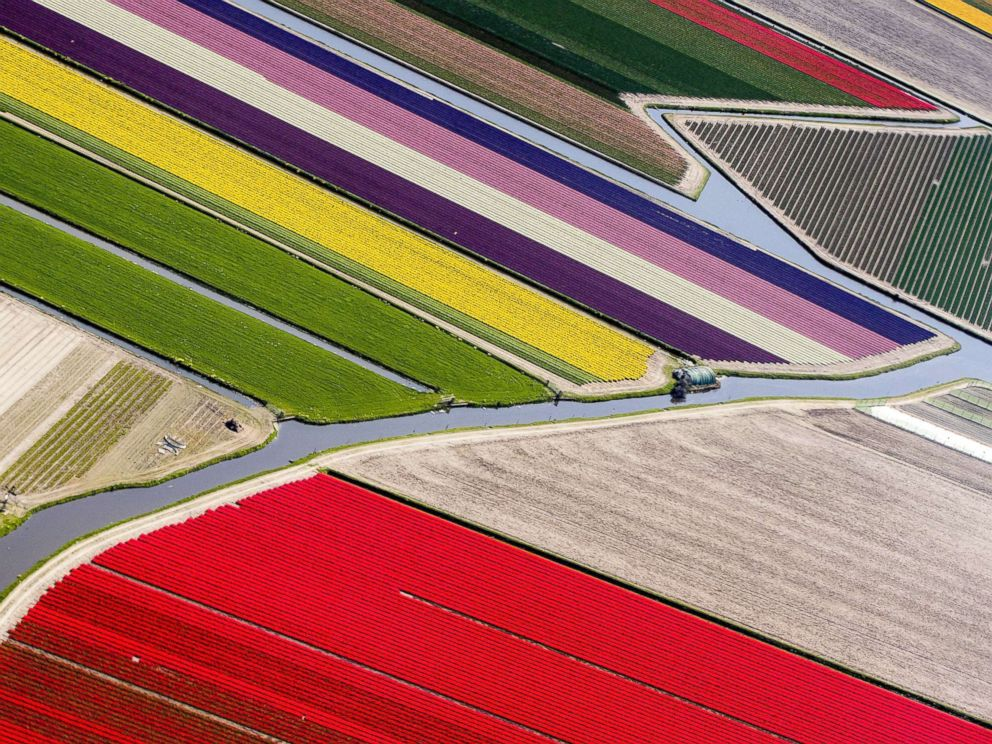 PHOTO: An aerial photograph of the blossoming bulb fields and water canals in Lisse, The Netherlands, April 20, 2018.