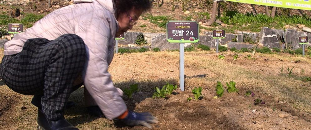 PHOTO: A woman works on an urban garden in South Korea.