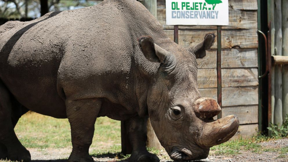 Last male northern white rhino dies after health