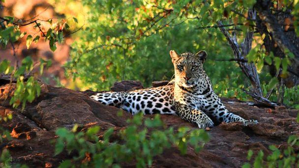 Toddler killed by leopard in South Africa's Kruger National Park