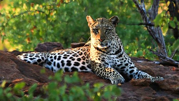 Toddler killed by leopard in South Africa's Kruger National Park
