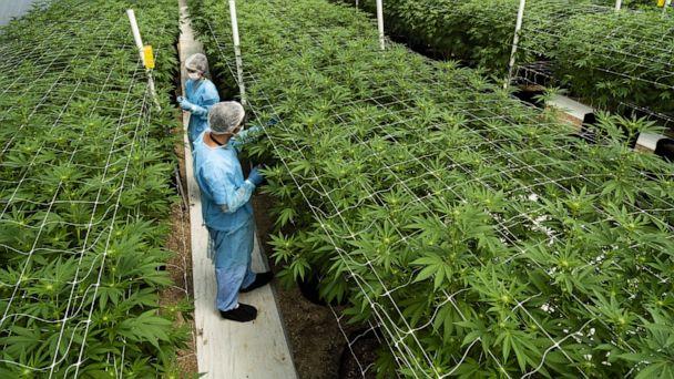 Holy Smoke! Church of England backs medicinal cannabis investments