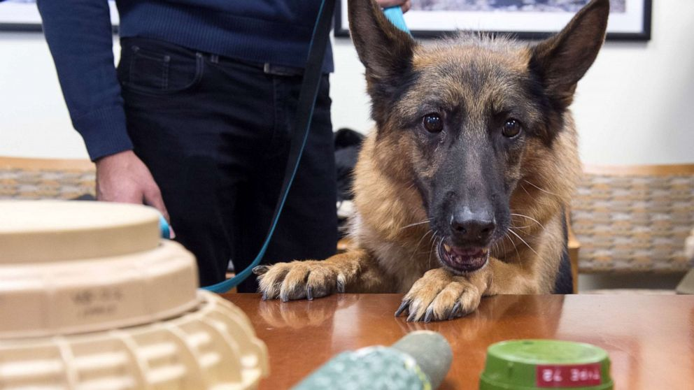 State Dept. failing to protect bomb-sniffing dogs from dying, getting poor care: Watchdog