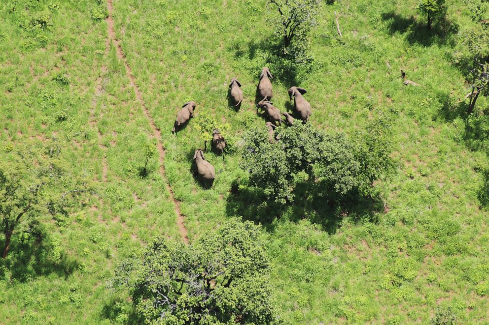 PHOTO: Elephants in the Niassa Reserve in Mozambique.