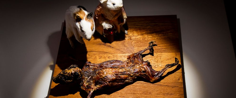 "PHOTO: The Museum of Disgusting Food, which opened, Oct. 31, 2018, in Malmo, Sweden, featured ""cuy,"" or guinea pig, popular in Peru."