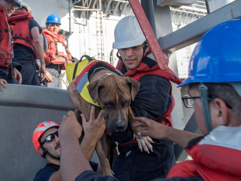 PHOTO: Sailors help Zeus, one of two dogs who were accompanying two mariners who were aided by the amphibious dock landing ship USS Ashland (LSD 48), Oct. 25, 2017.