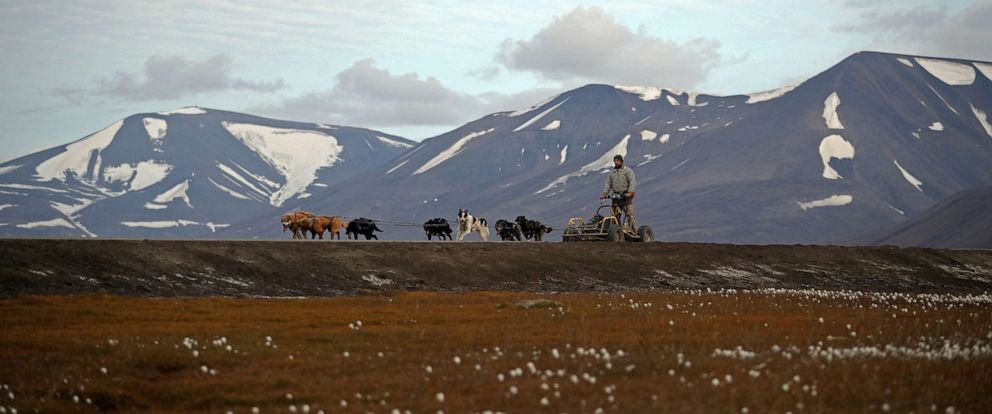 PHOTO: Husky dogs pull a rig and musher Audun Salte through the town of Longyearbyen in Svalbard, Norway, Aug. 6, 2019. Salte worries that as temperatures warm, climate change could lead to the extinction of all life on Earth.