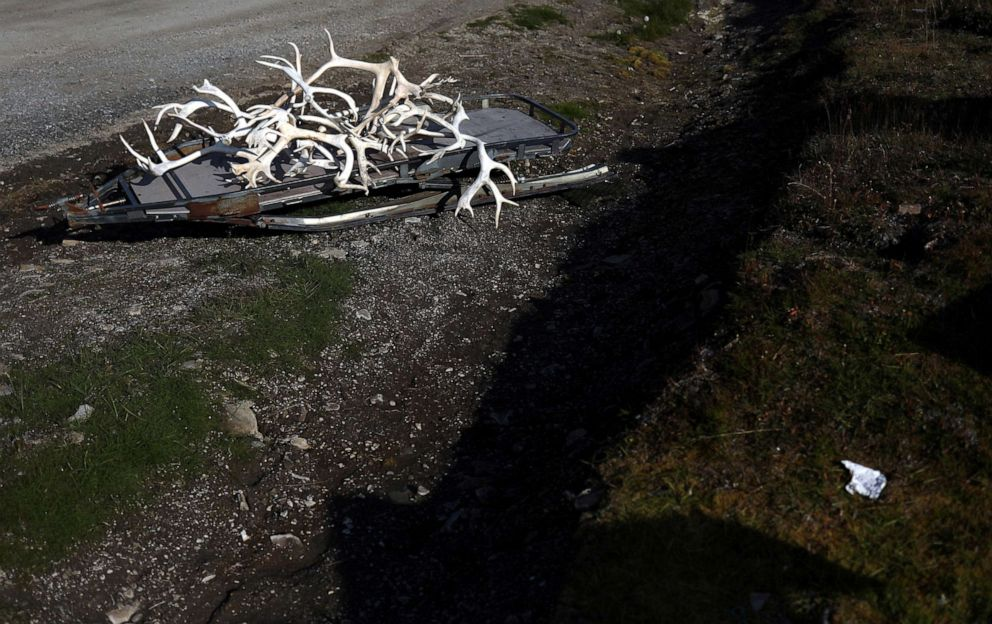 PHOTO: A pile of antlers are seen on a ski sled in the town of Longyearbyen in Svalbard, Norway, Aug. 6, 2019.