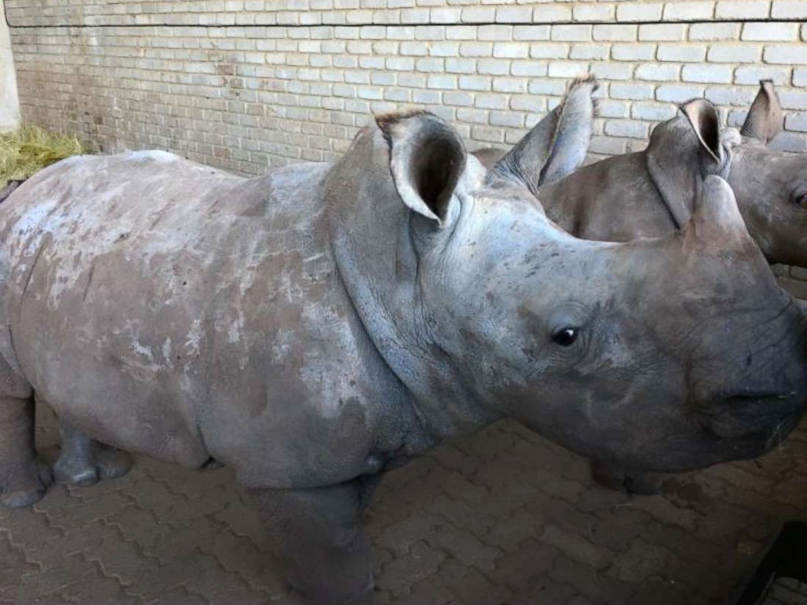 Nonprofit works with veterinarians and farmers to protect rhinos
