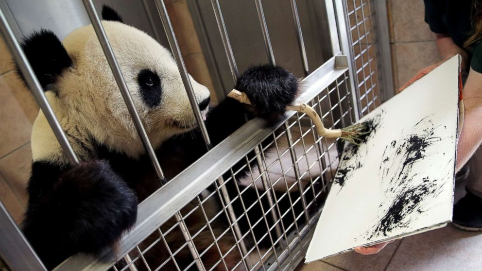 Giant Panda Yang Yang uses finger paint and a brush to create a picture at Schoenbrunn Zoo in Vienna, Austria, Aug. 10, 2018.