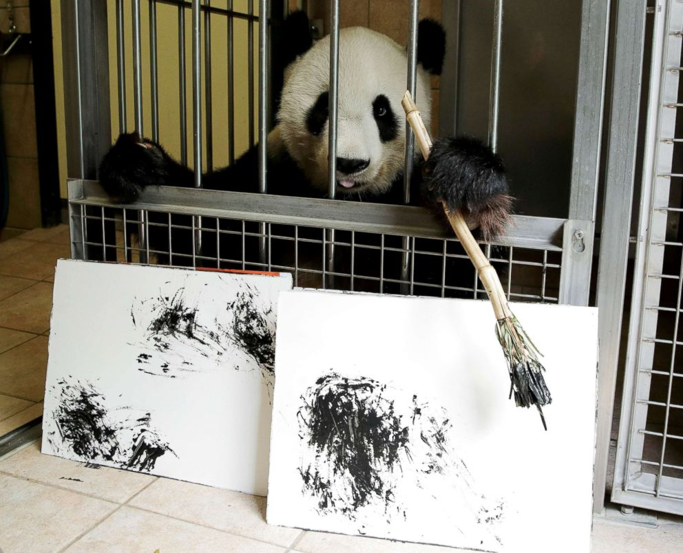PHOTO: Giant Panda Yang Yang holds a brush behind pictures it painted at Schoenbrunn Zoo in Vienna, Austria, Aug. 10, 2018.