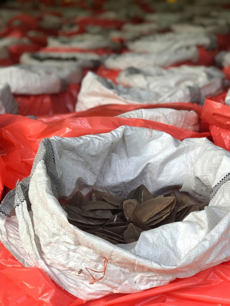 PHOTO: This Monday, July 22, 2019, photo released by National Parks Board shows pangolin scales in bags in Singapore. Singapore has seized nearly 10 tons of elephant ivory and about 12 tons of pangolin scales belonging to around 2,000 of the mammals.