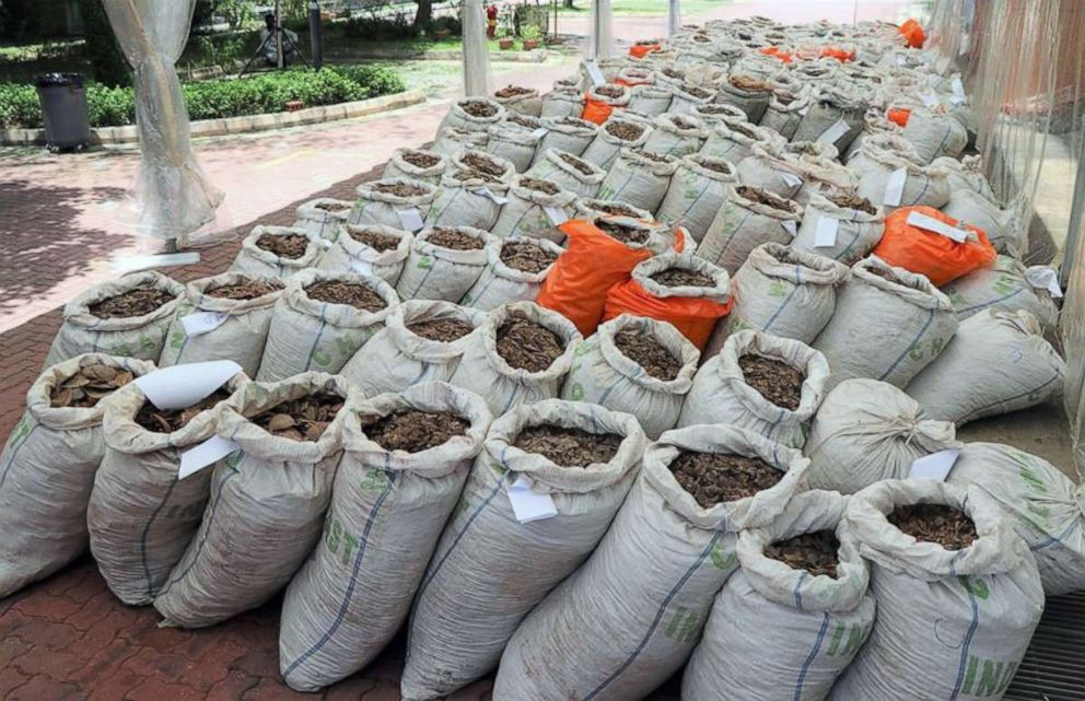 PHOTO: Authorities in Singapore seized over 14 tons of pangolin scales estimated to be worth about $38.7 million on April 3, 2019.