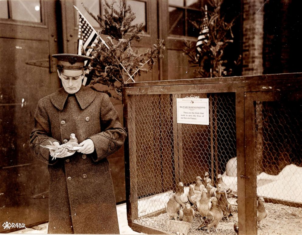 PHOTO: 2nd Lt. Milne pictured in 1918 with carrier pigeons he is raising for the Army during World War I. The sign on the pigeons cage reads, These are the birds that work to save the lives of our boys in France.