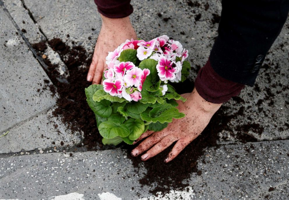 PHOTO: Brussels resident Anton Schuurmans plants flowers in an unrepaired pothole in Brussels, Belgium, April 5, 2018.